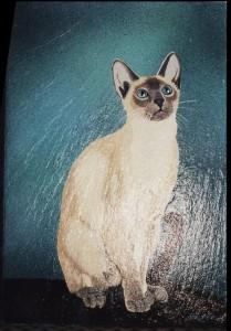 le chat siamois dans GALERIE PERSONNELLE siamois-209x300